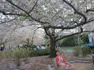 Mùa xuân ở DC