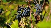 ….nhiều khi dưới nắp một chai rượu nhỏ là cả một câu chuyện lịch sử đang sóng sánh chờ bạn khám phá… (Columbia, MO, oKtoberFest 2013). Tiết trời se lạnh...