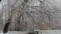 Tuyết đầu mùa. Năm nay, Bà Chúa Tuyết ưu ái cho vùng Đông Bắc nước Mỹ cảnh sắc tuyệt vời. Hôm qua những bông tuyết đầu mùa đã rơi, vẽ...