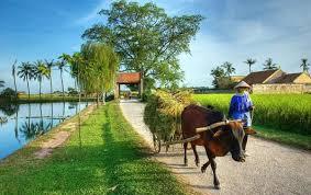 Một số tài liệu nghiên cứu về nông nghiệp nông thôn Việt Nam bằng tiếng Anh