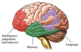 """Peter Doolittle: Bằng cách nào """"trí nhớ ngắn hạn"""" mang lại ý nghĩa cho thế giới"""