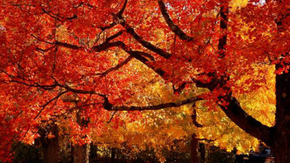 fall2[1]