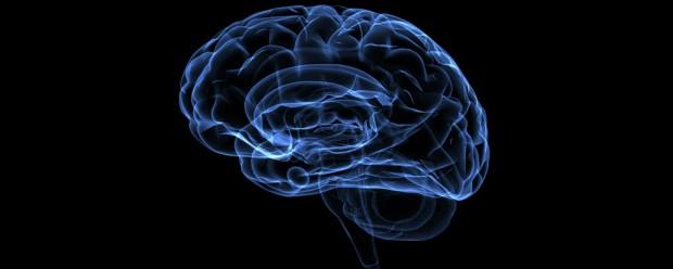 10 người có chỉ số IQ cao nhất mọi thời đại