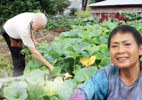 Trang trại rau Việt ở thủ đô nước Mỹ