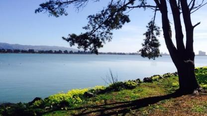 Bầu trời xanh ngắt và rất nhiều nắng ở Berkeley