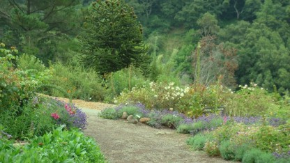 Một góc nhỏ của Berkeley Botanical Garden
