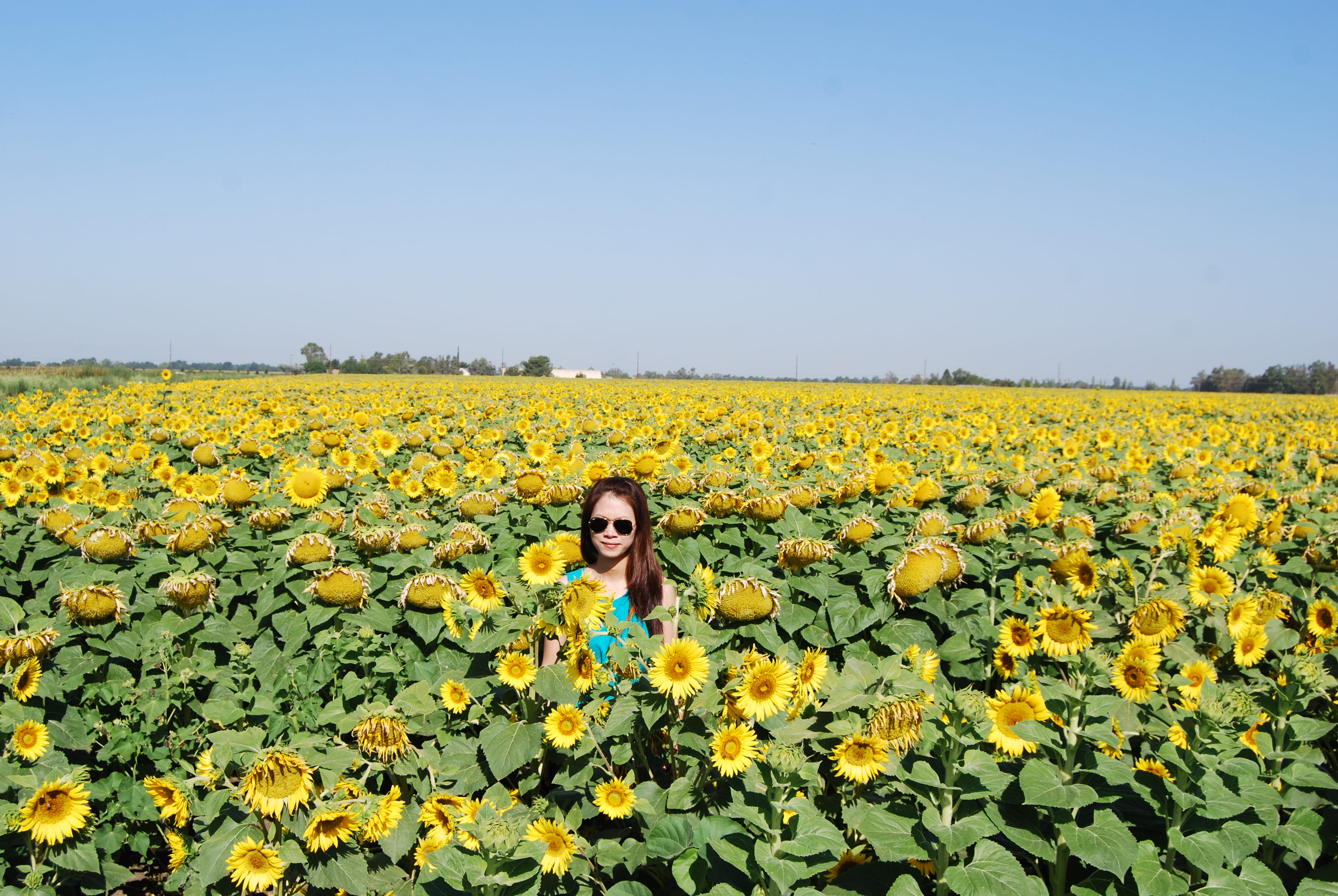 Ảnh 7: Một bạn nữ làm dáng trên cánh đồng bạt ngàn hoa hướng dương vào mùa hạ ở Bắc Cali