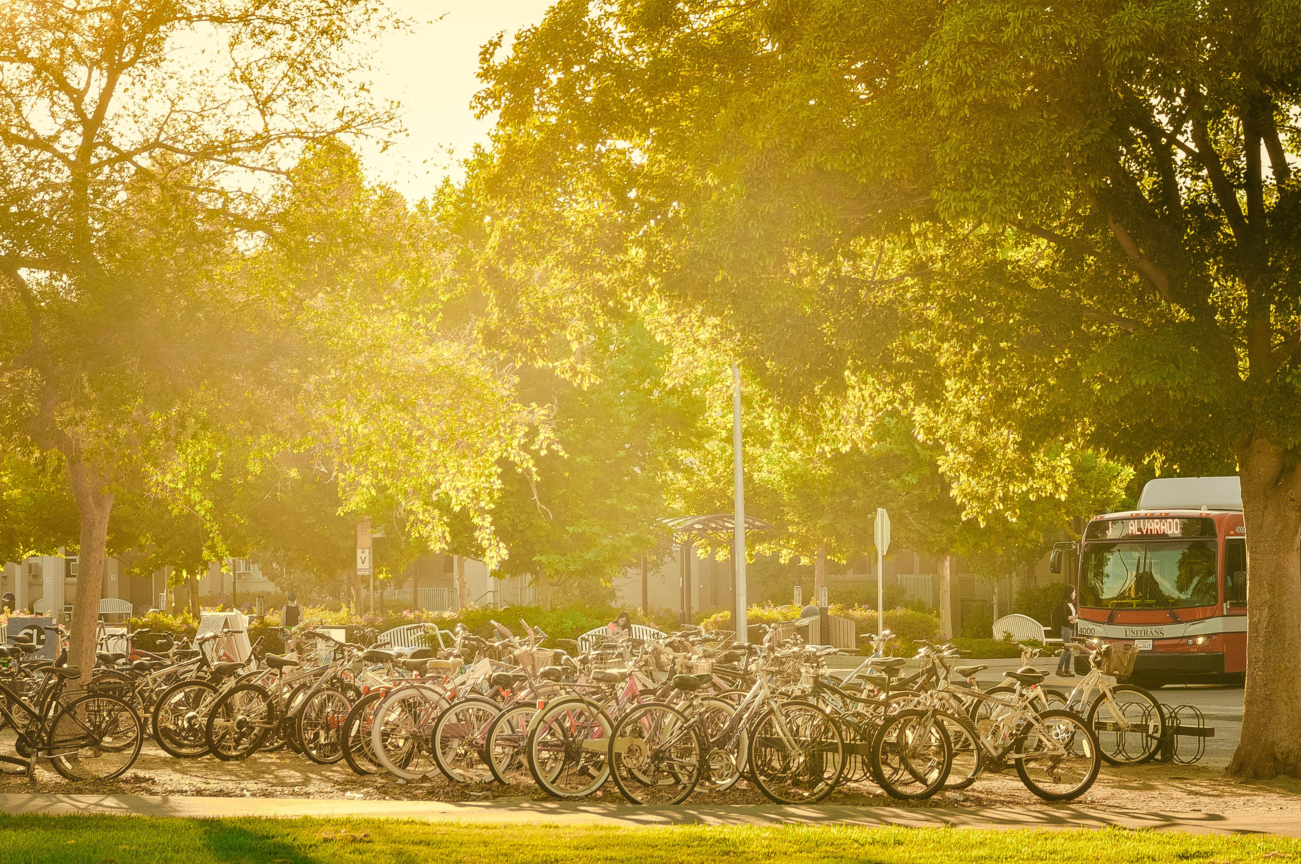 Davis được biết tới như Thủ đô xe đạp của nước Mỹ