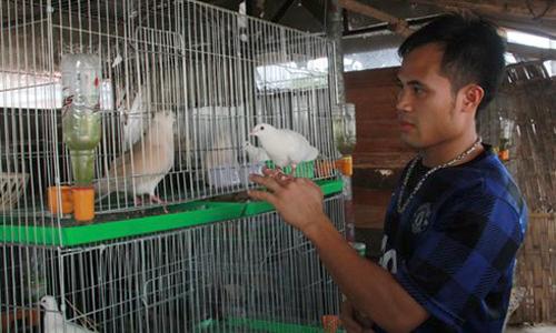 Lập trình viên chuyển nghề dạy chim hót, thu tiền tỷ mỗi năm