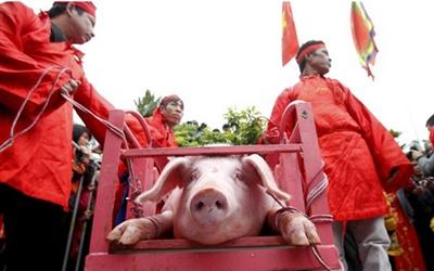 Phượng Đoàn – Chém lợn và vài suy ngẫm