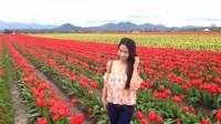 Nhật ký Ngày 01 tháng 04 năm 2015, Ngày hoa anh đào nở đẹp nhất ở University of Washington, Gởi tôi, những năm tuổi 20 ngọt ngào và thanh xuân...
