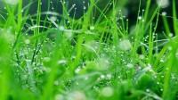 """Mùi cỏ Bạn hỏi tôi: """"Chỗ mày ở có gì hay?"""", tôi nghĩ mãi không biết cái gì thì hay. Với tôi,hơn một năm qua, tôi chỉ """"cảm"""" được mùi..."""