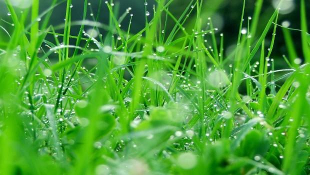"""Bài dự thi Hành trình nước Mỹ – Thư gửi một người: """"Mùi cỏ"""""""