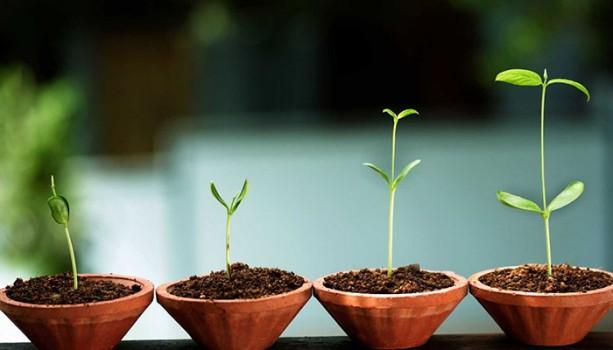 Tại Sao Vẫn Nên Đầu Tư Vào Những Startup Copycat?
