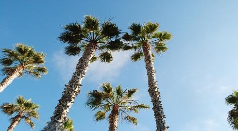 1o Lí Do Khiến Florida Là Điểm Đến Du Học Hấp Dẫn