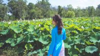Bài dự thi HTNM4 – Thể loại Ảnh: Hồ sen tại Washington, DC và những kỷ niệm tuổi thơ. Tác giả: Trần Hồng Phương Tôi đã xa nhà được tròn...