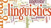 Không có gì ngạc nhiên khi Viện Công nghệ Massachusetts dẫn đầu về nghiên cứu ngôn ngữ, hay còn được gọi là ngôn ngữ học. Ngôi trường kĩ thuật này...