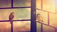 """Bài dự thiHành Trình Nước Mỹ 6– Thể loại: Bài viết. Tác giả:N.Q.M """"… Em chờ anh trước cổng Con chim sẻ của anh Con chim sẻ tóc xù Con..."""
